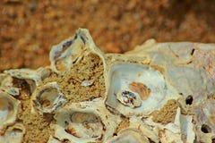 Viejos shelles Imagen de archivo libre de regalías