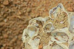 Viejos shelles Fotos de archivo