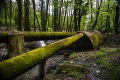Viejos waterpipes oxidados con el tanque en bosque imagen de archivo