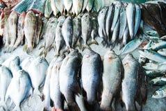 Viel Art der Fische im Frischmarkt Lizenzfreie Stockbilder