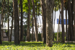 Viel Baum im Garten Lizenzfreie Stockfotos