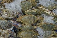 Viel Blumenkrabbe, blaue Krabbe, blaue Schwimmerkrabbe, blaue Mannakrabbe, Sandkrabbe zum Verkauf im Markt Lizenzfreie Stockfotografie