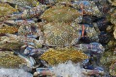 Viel Blumenkrabbe, blaue Krabbe, blaue Schwimmerkrabbe, blaue Mannakrabbe, Sandkrabbe zum Verkauf im Markt Stockfoto
