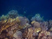 Viel bunte Koralle Stockfoto