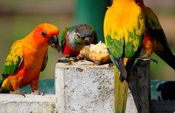 Viel bunter Papagei Lizenzfreie Stockbilder