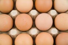 Viel der Eier Lizenzfreies Stockbild