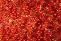 Viel der Früchte der roten Johannisbeere Lizenzfreies Stockfoto