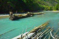 Viel een boom in rivier Royalty-vrije Stock Foto's