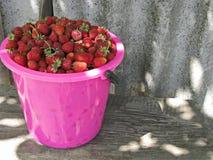 Viel Erdbeere Stockfoto
