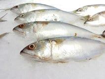 Viel frische Makrele auf dem Eis Lizenzfreie Stockfotos