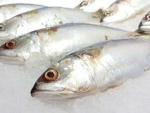 Viel frische Makrele auf dem Eis Lizenzfreie Stockfotografie