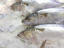Viel frische Makrele auf dem Eis Lizenzfreie Stockbilder