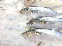 Viel frische Makrele auf dem Eis Stockfotos