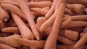 Viel Karottennahaufnahme stock video