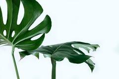 Viel lässt weißes unterschiedliches tropisches Beschaffenheitsgrün Musterhintergrund natürliche Postkarte der schönen Kunst frisc Lizenzfreie Stockbilder