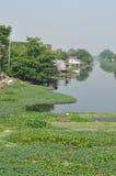 Viel machte Wasserhyazinthe im Kanal Wasserverschmutzung lizenzfreies stockbild