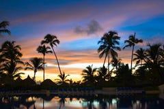 Viel schwarze Palme auf einer Nachtstrand-Purpurnacht Stockfoto
