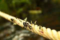 Viel Schwarzweiss-Schmetterling auf dem langen Seil Lizenzfreies Stockfoto