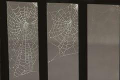 Viel Spinnenweb mit Tautropfen Lizenzfreie Stockfotos