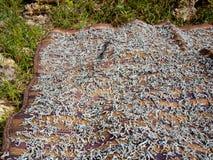 Viel Trockenfisch, der auf einer Matte liegt  Lizenzfreies Stockfoto