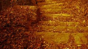 Viel verwüsten gelbes Blatt auf Spuren, Ruhe und stock video footage