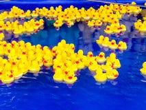 Viel von den gelben Spielzeugenten, die in blaues Wasser des Swimmingpools schwimmen lizenzfreies stockbild
