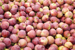 Viele Äpfel Lizenzfreies Stockfoto