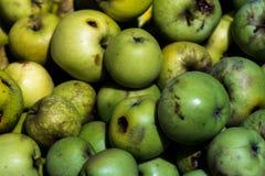 Viele Äpfel des Bauernhofes für Hintergrund Stockfotografie