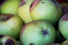 Viele Äpfel des Bauernhofes für Hintergrund Lizenzfreie Stockfotos