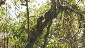 Viele Affen auf dem Baum stock video