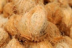 Viele alten braunen Kokosnüsse Lizenzfreie Stockfotografie