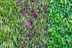 Viele Arten Anlage auf Wand als Hintergrund Lizenzfreie Stockbilder