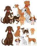 Viele Arten Hunde lizenzfreie abbildung