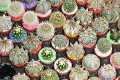Viele Arten Kaktus Stockfotos