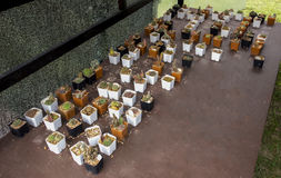 Viele Arten Kaktus setzten an das Sperrholz Stockfotografie