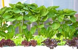 Viele Arten von soilless oder von Wasserkultur Lizenzfreies Stockfoto