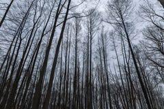 Viele Bäume auf dem Hintergrund des bewölkten Himmels Stockbild