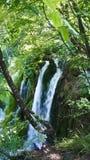 Viele Baumstümpfe im Wasser, Plitvice Seen in Kroatien, Nationalpark lizenzfreies stockbild