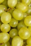 Viele Beeren von weißen Trauben Stockfotografie