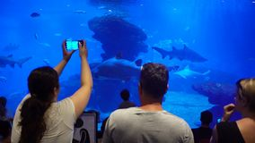 Viele Besucher im Großen Aquarium stock video