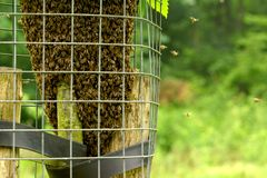 Viele Bienen stockfotografie