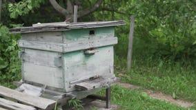 Viele Bienen fliegen zum Bienenstock Biene auf dem Bauernhof stock video footage