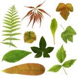 Viele Blätter auf einem weißen Hintergrund Lizenzfreies Stockbild