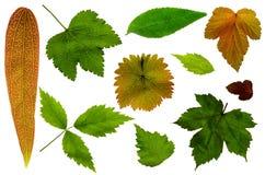 Viele Blätter auf einem weißen Hintergrund Stockbild