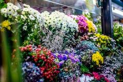 Viele Blumen Stockfoto