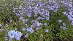 Viele Blumen in der Wiese stock video