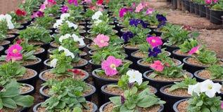 Viele Blumentöpfe in gardent ein schönes Grün Stockbild