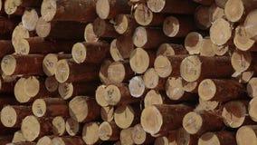 Viele Brennholz auf Lager, ges?gte St?mme auf Lager in Folge, Kolbenenden von ges?gten B?umen in der S?gem?hle stock video footage