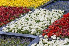Viele bunte Holländer Tilips gelegt in Spalte Bereiche im Garten Lizenzfreie Stockbilder
