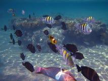 Viele bunten Fische Lizenzfreies Stockfoto